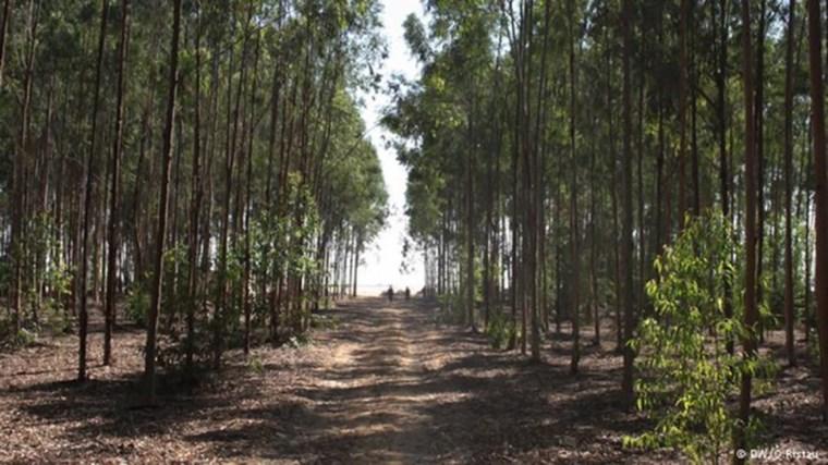 Στην Αίγυπτο φτιάχνουν δάση στην έρημο