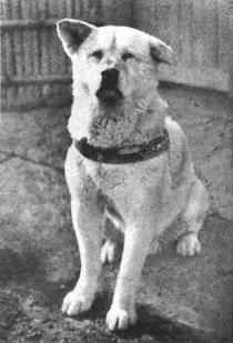 Χάτσικο: Ο σκύλος που έγινε σύμβολο της απόλυτης αφοσίωσης