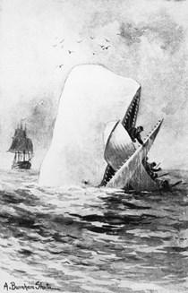 Μόμπι Ντικ φάλαινα