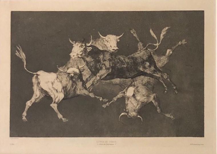 Bull's rain Goya